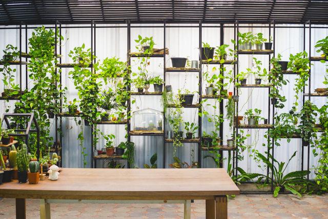 長く快適に暮らしたい新築住宅。家まわりの害虫対策は天然のハーブにお任せ