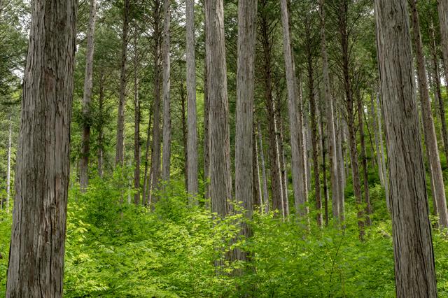 フィトンチッドの癒し効果。木の家の「快適」を科学する